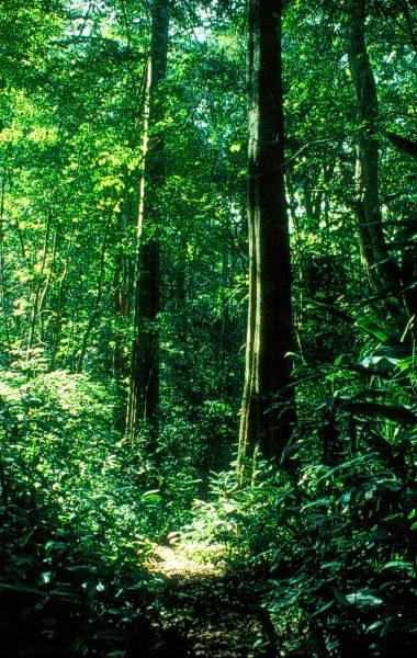 Die zufahrtsstraße zum südlichsten regenwald afrikas